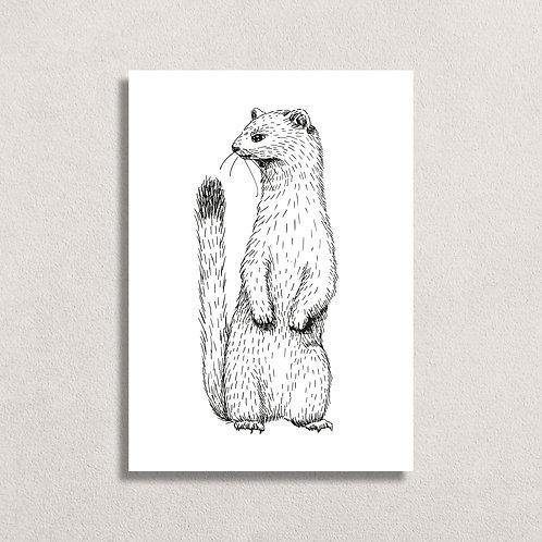 Kaart Otter