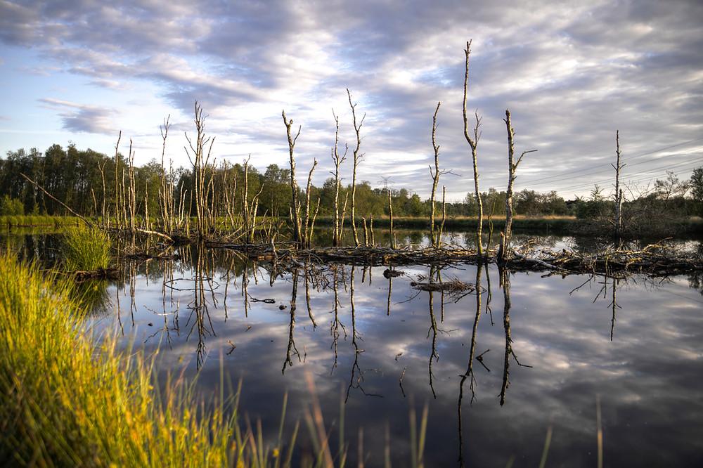 a real nice wetland