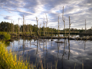 Leveraging New Geospatial Tools and Technology for Mapping Wetland across Alberta's Boreal Forests