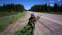Allometric equations developed for the underrepresented shrubs of Alberta's peatlands