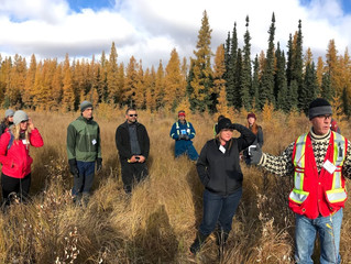 Facing the Challenge of Boreal Restoration