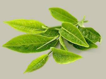 groene-thee.jpg