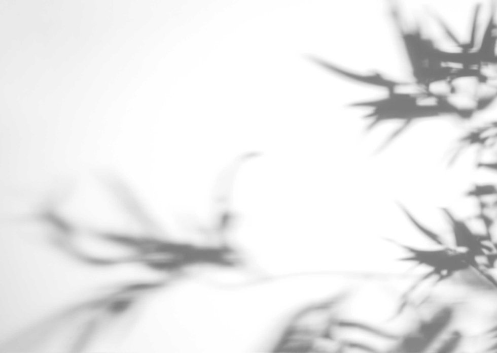 blurred-monstera-leaves-shadow-white-bac