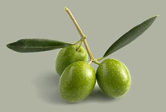 olijven.jpg