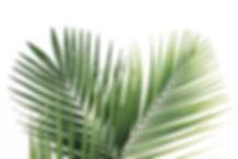 palm-blad2.jpg
