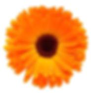 marigold.klein2.jpg