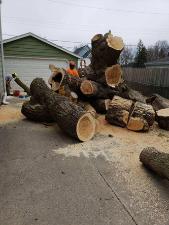 Boyd's Tree Service