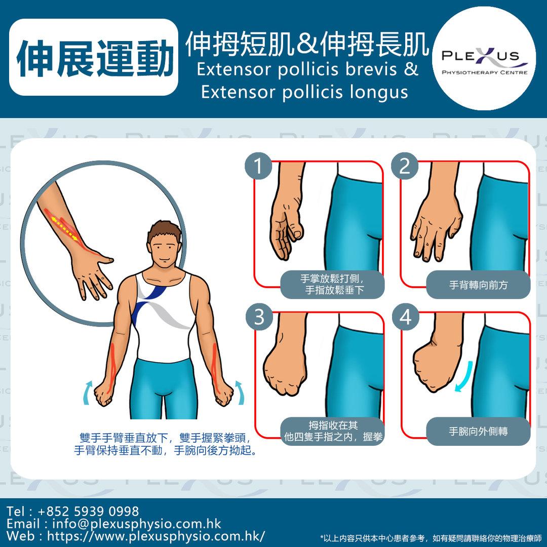 伸拇短肌&伸拇長肌