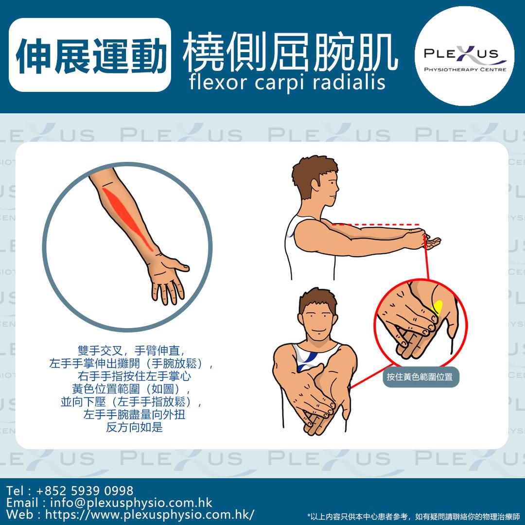 橈側屈腕肌