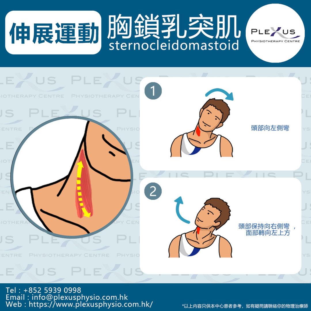 7 胸鎖乳突肌 -.jpg