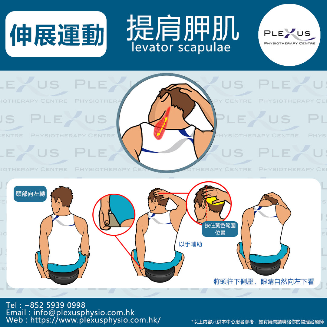 4 提肩胛肌-.jpg