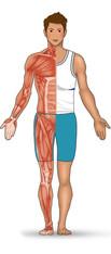 人體肌肉分布-1.jpg