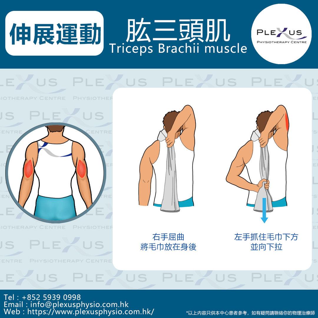 肱三頭肌.jpg