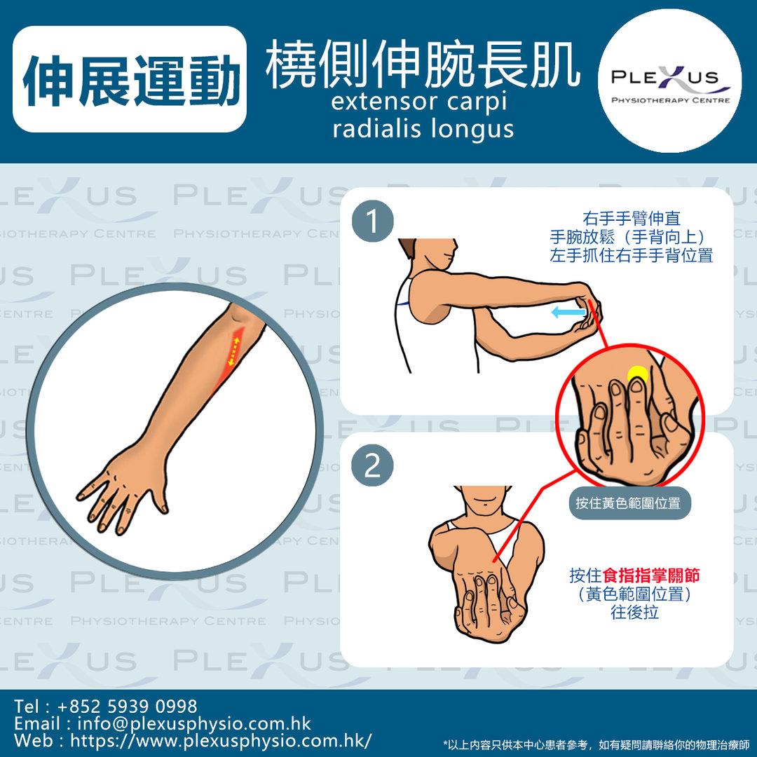 橈側伸腕長肌