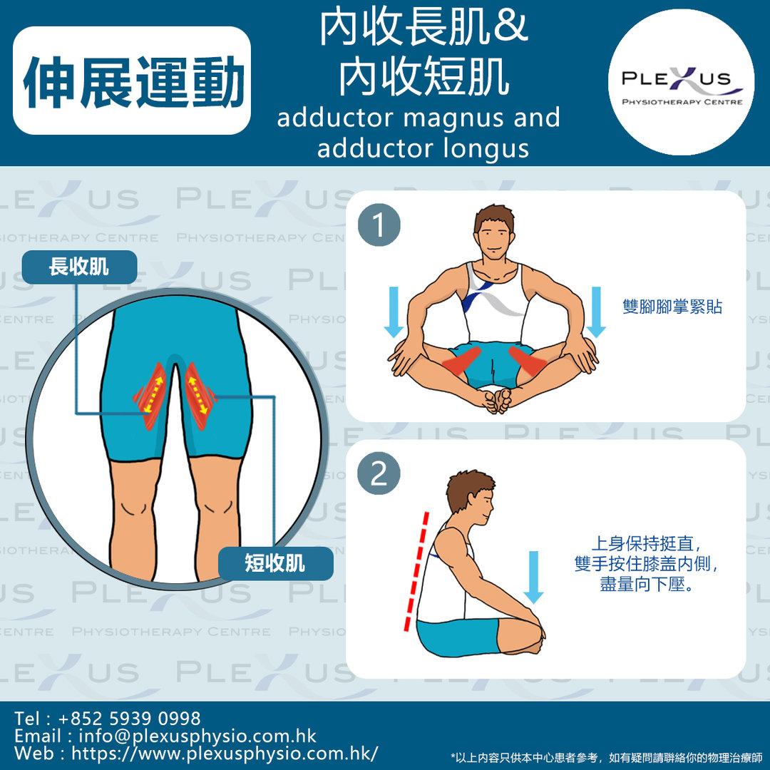 內收長肌&短肌