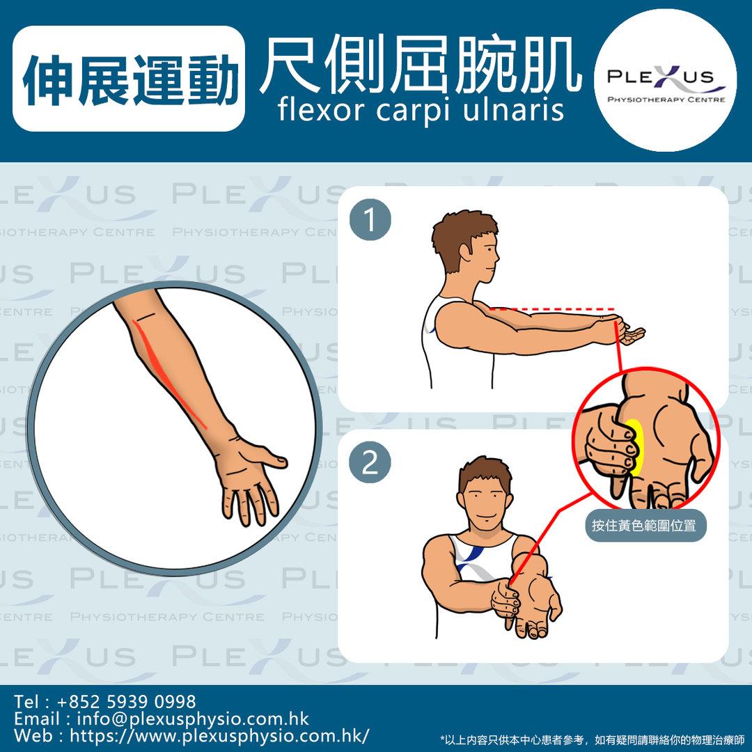 尺側屈腕肌