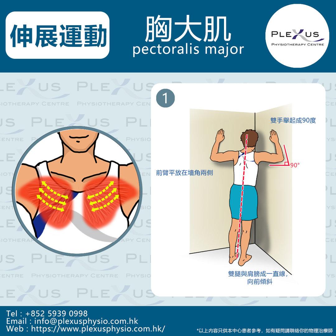 胸大肌 2