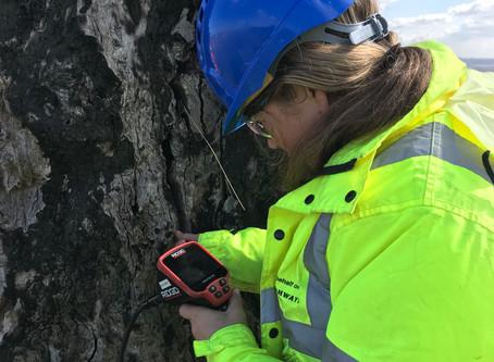 Tree Bat Assessments