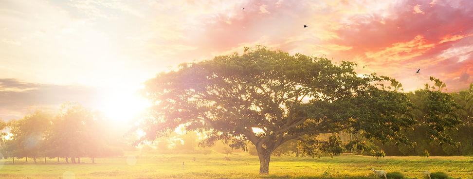 木光鳥朝陽ヘッダー画像.jpg