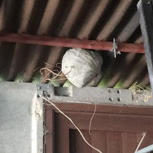 Wasp Nest in garage.jpg