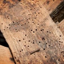Pest Control Woodworm