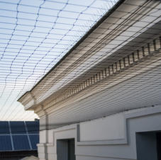 Pigeon Proofing & Netting