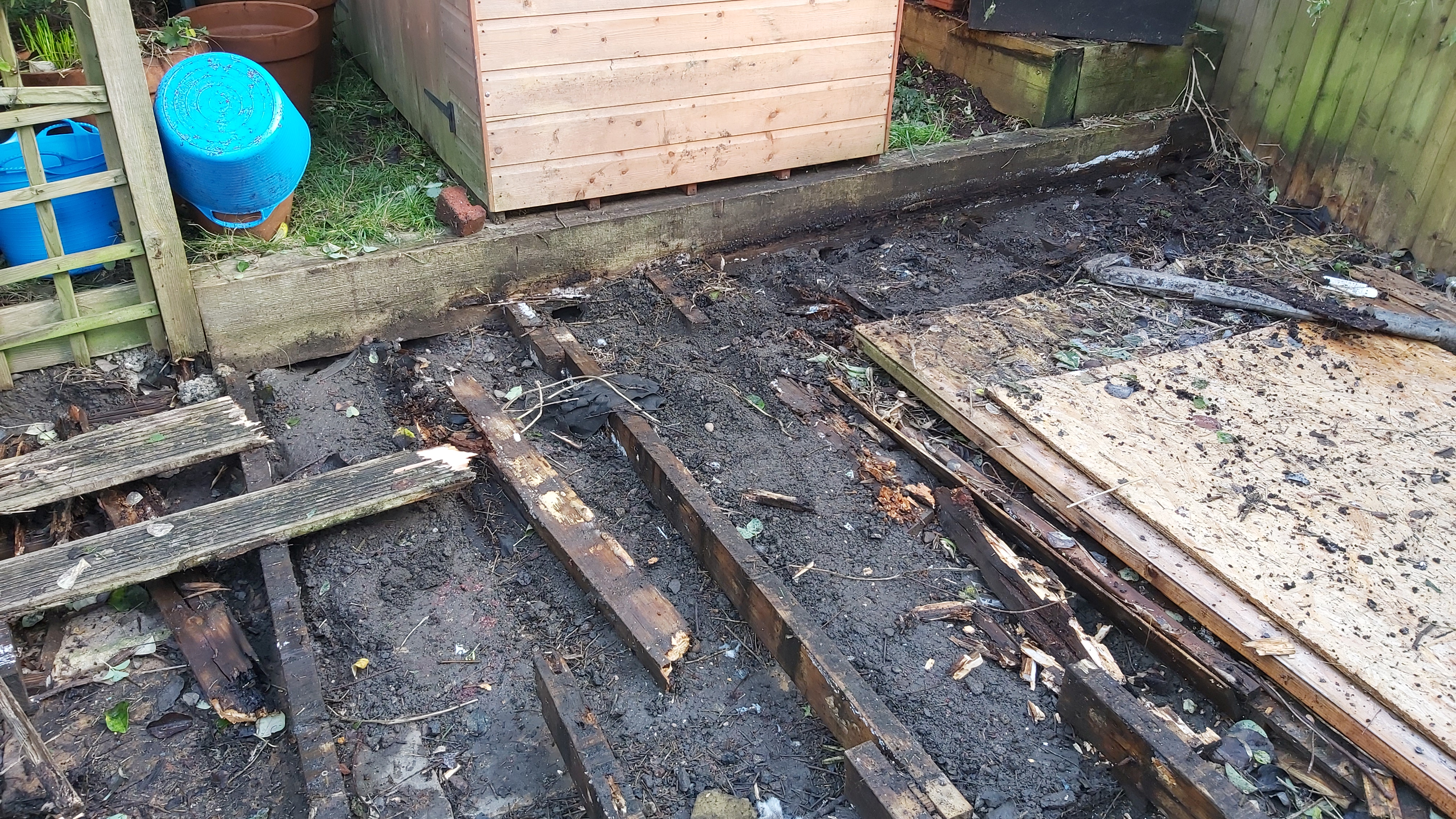 Rat burrows under decking