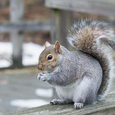 Pest Control Squirrels