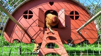 henbarrow mobile hen run