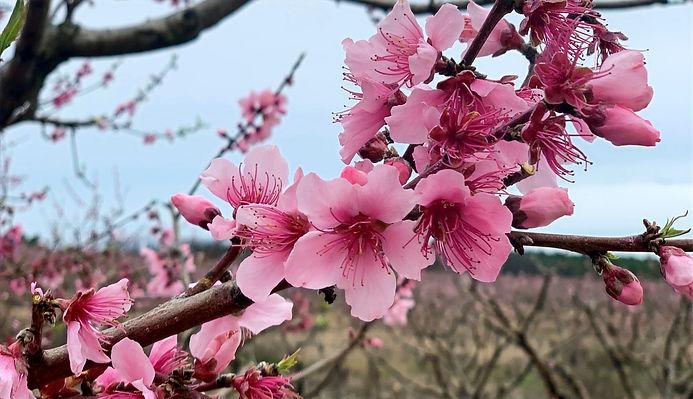 blooms_edited_edited.jpg