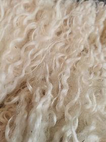 wool benefits
