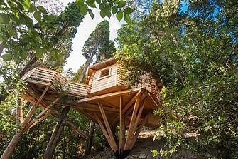 cabane-bois-perchee-dans-arbre-oriente-t