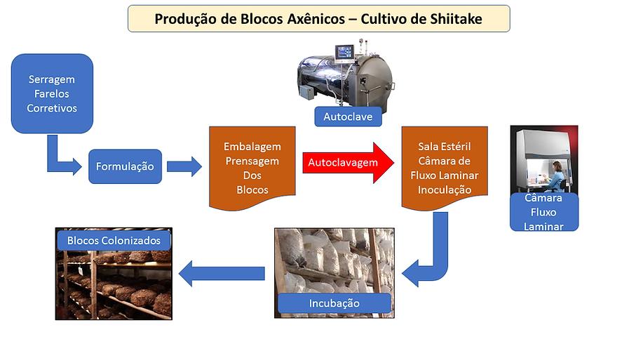 projetocogumelos.org Projeto para produção de blocos axênicos, Cogumelo Shiitake, cursos, projeto para instalação de produção de blocos axênicos