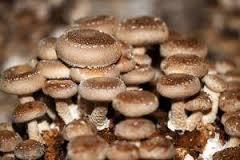 ... Eu moro em Minas Gerais e quero produzir cogumelos...