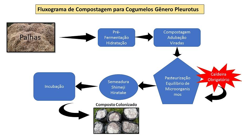 Projetocogumelos.org Fluxograma de compostagem para cogumelos pleurotus
