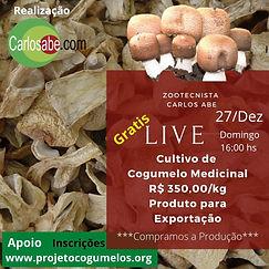 Live de Produção Cogumelo Agaricus blaze