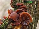 Cursos De Produção de Cogumelos, sementes,compostos
