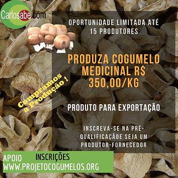 Curso EAD PQ Agaricus.jpg
