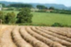 Projetocogumelos@org cultivo Agaricus blazei a cêu aberto cultivo  produção comercio rentabilidade