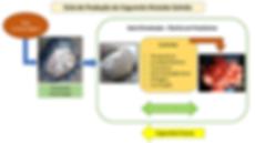 projetocogumelos.org ciclo  de produção de cogumelos hiratake salmão cultivo rentabilidade lucro