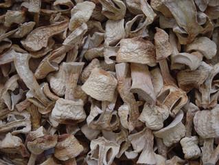Cogumelo Agaricus blazei - R$ 350,00/kg !!!