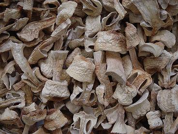 Projetocogumelos.org Cogumelos desidratados Agaricus blazei