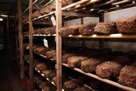 Curso de Produção de Cogumelos, Cogumelo Shiitake em toras, Cogumelo Shiitake no Bloco, Cultivo Axênico, Plantio de Kunugui, Produção do Extrato Pirolenhoso, Produção de Sementes de Shiitake, Sementes de Shiitake na Cavilha e em Serragem