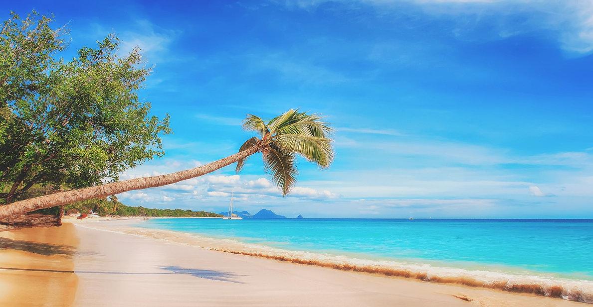 Palm tree on beach Luxury Travel Agency