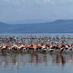 kimgoni-tanzania-safari-lake-natron (3).