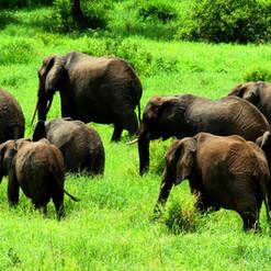 kimgoni-tanzania-safari-tarangire (6).jp