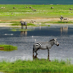 kimgoni-tanzania-safari-ngorongoro (2).j