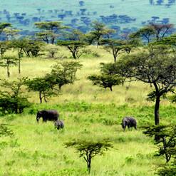 kimgoni-tanzania-safari-serengeti (7).jp