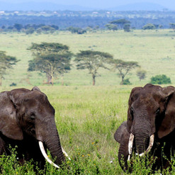 kimgoni-tanzania-safari-serengeti_edited