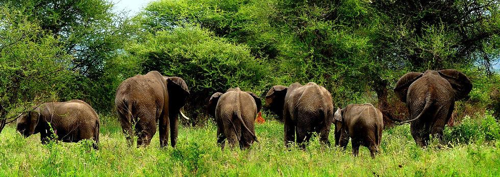 kimgoni-tanzania-safari-tarangire (2).jp